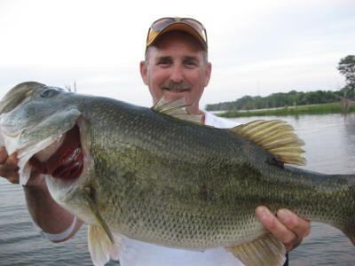 Rules of thumb bass fishing for Best white fish to eat